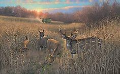 """prints of deer images   Harvest Time - Whitetail Deer"""" - new print by Michael Sieve ..."""