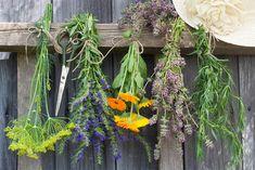 Grapevine Wreath, Grape Vines, Herbs, Wreaths, Flowers, Plants, Painting, Door Wreaths, Vineyard Vines