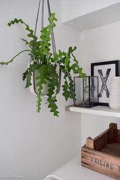 The 10 best indoor hanging plants Best Indoor Hanging Plants, Home Greenhouse, Diy Kitchen Decor, Home Comforts, Cactus Y Suculentas, Interior Plants, Cool Plants, Home Living Room, Interior Styling