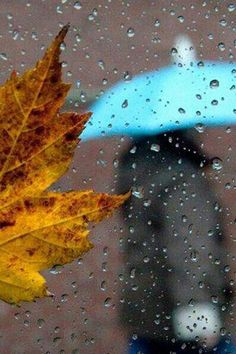 Fall and rain Walking In The Rain, Singing In The Rain, Rainy Night, Rainy Days, Rainy Mood, Dew Drops, Rain Drops, Water Drops, I Love Rain