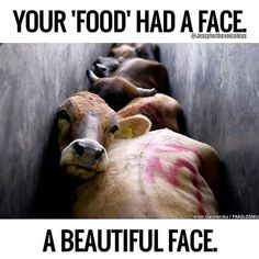 Posted Your 'burger' once had a beautiful face a family and a kind beating heart. Save the planet go vegan Vegetarian Quotes, Vegan Quotes, Vegetarian Facts, Vegan Facts, Becoming Vegetarian, Vegetarian Lifestyle, Beginner Vegetarian, Vegan Humor, Why Vegan