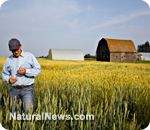 Dow Chemicals seeks approval for new genetically modified seeds that present worse threat than Monsanto's Roundup