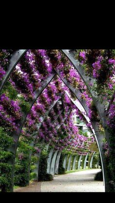 South Bank Parklands in Queensland, Australia. Bougainvillea, I think. This would be nice to provide hallway shade. Landscape Architecture, Landscape Design, Garden Design, Beautiful Architecture, Architecture Design, Beautiful Space, Beautiful Gardens, Beautiful Pictures, Beautiful Life