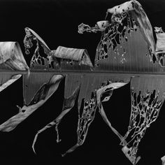 Brett Weston - BANANA LEAF, HONOLULU, 1980