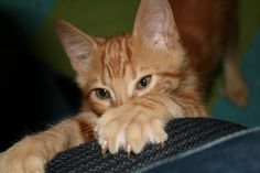 scratch proof your furniture from cats
