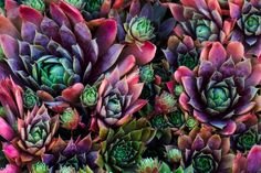 Psychedelic Succulents by Ron Coscorrosa on 500px