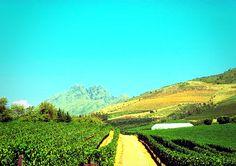 South African wine lands Travel Around The World, Around The Worlds, South African Wine, Vineyard, My Photos, Outdoor, Outdoors, Vine Yard, Vineyard Vines