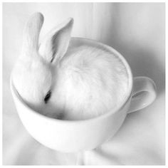 White Bunny & Cup