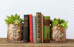 DIY Succulent Bookends: Succulents add a welcome pop of greenery to any bookcase when planted in clear vases filled with pretty river stones.