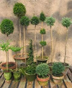 Topiaries Inside and Out