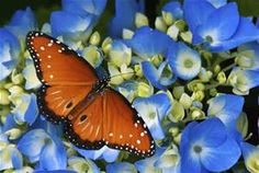 Blue & Orange flowers - Bing Images