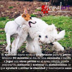 Ejercicio diario. #animales #perros #mascotas