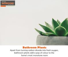 Ever wonder what benefits bathroom plants can offer? Find out here… Simply Bathrooms, Dream Bathrooms, Color Pop, Colour, Bathroom Plants, Bathroom Styling, Color, Colour Pop, Colors