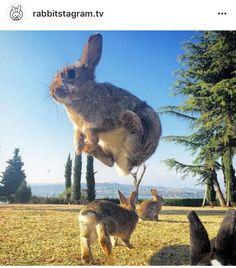 Flying bunny haha
