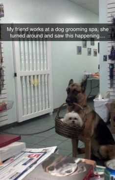 150 Funny Animal Snapchats Pictures #funnydogpictures Funny Animal Pictures, Cute Funny Animals, Funny Cute, Funny Dogs, Animal Pics, Funny Humor, Super Funny, Dog Humor, Random Pictures