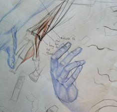 """My friend and student Jon Marshall brought in a great set of hand studies after various masters. We talked about various difficult spots including the knuckles and the """"snuff box"""". Jon's drawings are in blue, my notes are in red and black. Gross Anatomy, Old Head, Anatomy Drawing, Figure Drawing, Art Lessons, Bring It On, Study, Hands, Drawings"""
