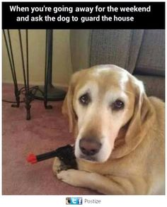 Friday Funny: Security Dog! LOL  Have a wonderful and safe weekend.