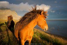 horóscopos de la Luna Nueva en Sagitario 2014 Damos por acabada la temporada de Escorpio y, lo que es aún más importante, estamos en el último tramo del ciclo de Saturno en Escorpio. Han sido dos años muy kármicos e intensos. <3 #astrología #LunaNueva #horóscopo #predicciones #sagitario #caballos #horses #sea #coast