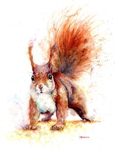 Watercolour Squirrel, print of original painting A3 size on watercolour paper | eBay