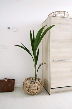 Mijn woonkamer, een nieuw kijkje. Less is... laat maar - Eenig Wonen Coconut Palm Tree, Living Room Plants, Indoor Trees, Palm Plant, Yard Ideas, Decoration, Home Deco, Stockholm, Ideas Para