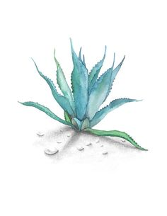 Agave Watercolor by AprylMade on Etsy
