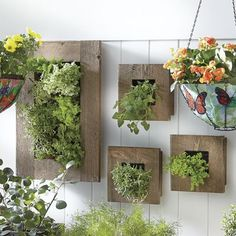 20 Creative DIY Wooden Wall Planter Ideas To Inspiring Your Home Decor Wall Plant Holder, Plant Wall, Plant Holders, Diy Wooden Wall, Wooden Walls, Wall Mounted Planters, Wall Planters, Succulent Wall Planter, Plastic Planter