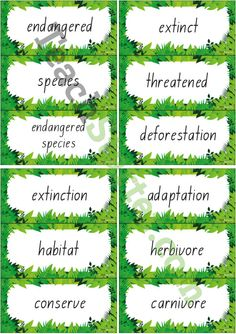 Forty-two endangered species related vocabulary cards for a word wall.