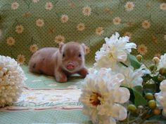 Image result for little bit of heaven nature and animals