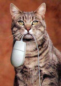 Hab 'ne Maus gefangen
