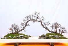 Lingnan Bonsai style, a Penjing bridge. Photo by Matyie Che Makhtar.