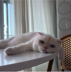 Wake up like sunday Cute Funny Animals, Cute Baby Animals, Animals And Pets, Funny Cats, Puppies And Kitties, Cats And Kittens, Cat Aesthetic, Pretty Cats, Cat Memes