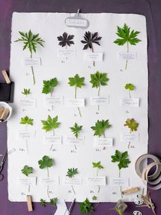 Activité : l'herbier du cours de Botanique des sorciers