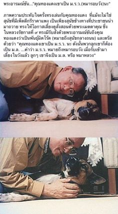 His Majesty playing with Mrs.Thong Daeng,his pet dog. King Phumipol, King Rama 9, King Of Kings, King Queen, Thailand History, King Thailand, Queen Sirikit, Bhumibol Adulyadej, Rare Images