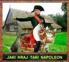 Weekend Humor, Motto, Cos, Memes, Jokes, Historia, Madeleine, Funny, Animal Jokes