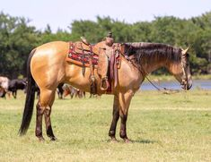 My Horse, Horse Tack, Horses, American Quarter Horse, Animals, Life, Animales, Animaux, Horse
