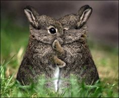 hugging bunnies!