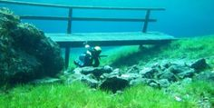 Underwater Beauty of Grassland