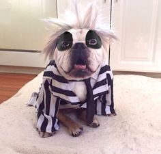 """Beetlejuice, Beetlejuice, Beetlejuice..."" :) OMG! I know he's an English Bulldog, but I HAVE to pin this one ; )"