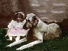 irish wolfhound and little girl