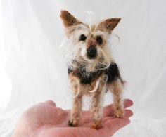 Yorkie cross -Little Sid *Explored* 27/02/2014   Flickr - Photo Sharing!