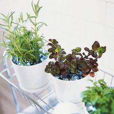 Bath Buddies - grow fresh herbs for putting in your bath