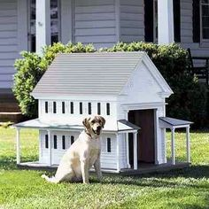 15 unique dog houses via [thepetscentral] | dog houses and dog
