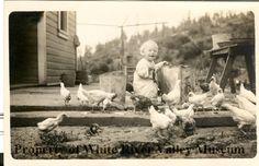 Little Boy Feeding Chickens