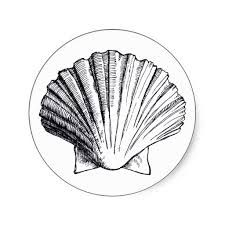 seashell drawing - Google Search