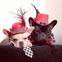 11 Reasons Frenchie's make the best Valentines- Treats Happen ... French Bulldogs