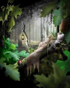 animated fairies - Google Search