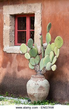 Sicily, Italy. A prickly pear cactus in an old terracotta pot stands against an ochre coloured wall - Stock Image