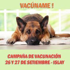Campaña de #vacunación #canina