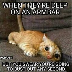 25 Cat Memes That'll Tickle Your Whiskers - I Can Has Cheezburger? Source by videos wallpaper cat cat memes cat videos cat memes cat quotes cats cats pictures cats videos Funny Animals With Captions, Funny Animal Quotes, Cat Quotes, Funny Animal Pictures, Funny Images, Animal Sayings, Funny Quotes, Hilarious Sayings, Animal Humor