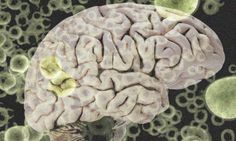 Model for robots with bacteria-controlled brains - http://bioengineer.org/model-for-robots-with-bacteria-controlled-brains/